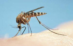 mosquito-main_Full
